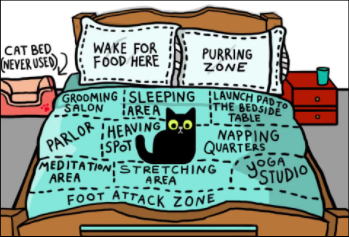 a cat lieing on a bed that is divided up into areas