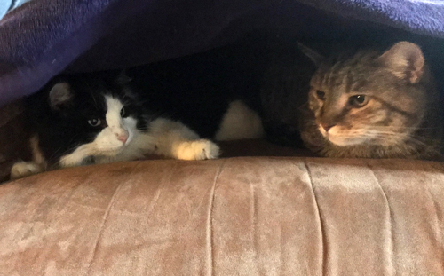 two cats on an easy chair under a blanket
